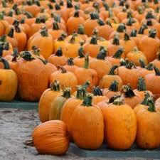 Maryland Pumpkin Patches Near Baltimore by Papa John U0027s Farm 11 Photos U0026 12 Reviews Local Services 8065