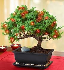 Astounding Design Bonsai Christmas Tree Decorations Martha Stewart Lights Gift Style Merry