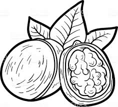 Coloring Book For Children Fruits And Vegetables Walnut Royalty Free Stock Vector