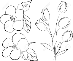 Flower Bouquet Drawing Simple Two Hibiscus Flowers And Tulip Bouquet – Freehand Stock
