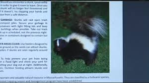 Pets Beware: It's Skunk Mating Season - YouTube How To Get Rid Of Skunks From Under A Shed Youtube Rabbits Identify And Rid Garden Pest Of And Prevent Infestation With Professional Skunk In Backyard Outdoor Goods To Your Yard Quick Ideas Image Beasts Diggings Droppings Moles Telegraph Mole Removal Skunk Control Treatments Repellent For The Home Yard Garden Odor What Really Works Pics On Extraordinary Affordable Wildlife Control Toronto Raccoon Squirrel Awesome A Wliinc