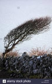 Christmas Tree Saplings For Sale Ireland by Ireland Tree Growing Stock Photos U0026 Ireland Tree Growing Stock
