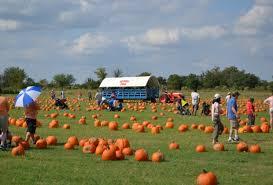 Pumpkin Picking Richmond by Where To Find Pumpkin Patches Around Houston Mommypoppins