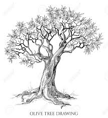 Illustration of Olive tree isolated hand drawn vector vector art clipart and stock vectors