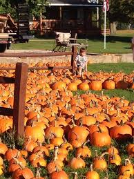 Best Pumpkin Patches Indianapolis by Russell Farms Pumpkin Patch Indiana Haunted Houses