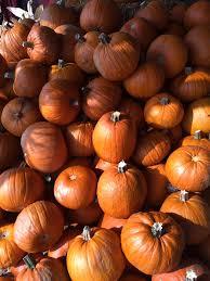 Bishop Pumpkin Farm Wedding by Brantwood Farms