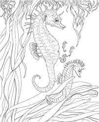 Elegant Ocean Coloring Pages For Adults 63 On Picture Page With