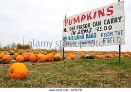 Kent Ohio Pumpkin Patches by Pumpkins For Sale Sign Stock Photos U0026 Pumpkins For Sale Sign Stock