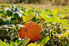 Pumpkin Farm Ct by Paproski U0027s Castle Hill Farm Ct Products And Services Ctp U0026s