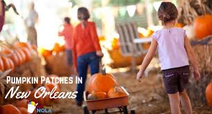 Ms Heathers Pumpkin Patch Louisiana by Pumpkin Patches In New Orleans Pint Sized Nola