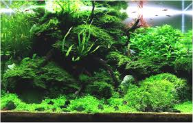 Aquascape Design Layout New Suitable Plants Aquariums Pinterest ... Aquascape Designs For Your Aquarium Room Fniture Ideas Aquascaping Articles Tutorials Videos The Green Machine Blog Of The Month August 2009 Wakrubau Aquascaping World Planted Tank Contest Design Awards Awesome A Moss Experiment Driftwood Sale Mzanita Pieces Two Gardens By Laszlo Kiss Mini Youtube Warsciowestronytop