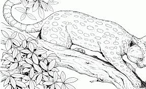 Cheetah Cat Hard Adult Animal Coloring Pages Print Download