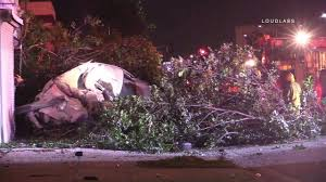 Silver Tip Christmas Tree Los Angeles by Driver Killed After Chase Vehicle Crashes Into Tree In South La