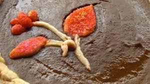 Best Pumpkin Pie With Molasses by Pumpkin Pie Iii Recipe Allrecipes Com