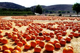 Underwood Farms Pumpkin Patch Hours by Travel Tuesday Underwood Family Farms U2014 The Indie