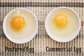 Bad Eggs Do They Float Or Sink by 12 Things You Should Know About And Do With Your Eggs Crunchy
