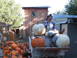 Southern Ohio Pumpkin Patches by Vala U0027s Pumpkin Patch Offers Fun For All Ages The Walking Tourists