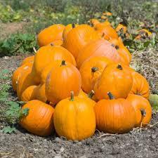 Varieties Of Pumpkins by Food Facts About Pumpkin And Pumpkin Seeds Shape Magazine