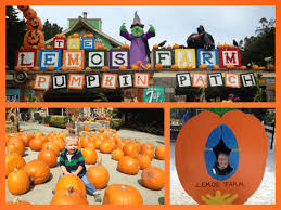 Half Moon Bay Pumpkin Patch 2017 by Silicon Valley Toddler And Beyond Pumpkin Patch Report Lemos