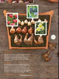 guide to planting different sized bulbs in a container green