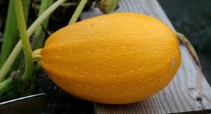 Types Of Pumpkins Grown In Uganda by Top 12 New Fruit And Vegetables Developed In Israel Israel21c