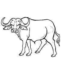 Wild Animal Coloring Page Free Printable African Buffalo Pages Featuring Sheets