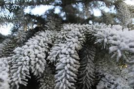 Flocking Powder For Christmas Trees by The Original Sno Flock Premium Artificial Decorative Self