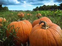 Nearby Pumpkin Patches by 9 Pumpkin Patches To Fall For Around New Orleans Nola Com