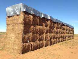 Hay Covers & Hay Tarps For Sale   Durable & Strong   ABC Tarps Rapid Relief Team Hay From Tasmania To Local Farmers Goulburn Post Trucks Wagon Lorry Rig Tractors Hay Straw Photos Youtube Hay Trucks For Hire Willow Creek Ranch Hauling Bales Hi Res Video 85601 Elk161 4563 Morocco Tinerhir Trucks Loaded With Bales Of Stock Wa Convoy Delivers Muchneed Droughtstricken Nsw Convoy Heavily Transporting Over Shipping And Exporting Staheli West Long Haul As Demand Outstrips Supply The Northern Daily Leader Specialized Trailer On Wheels For Transportation Of Custom And Equipment Favorite Texas Trucking