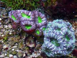 Colony Oklahoma Pumpkin Patch by Moving And Have To Downsize Reef2reef Saltwater And Reef