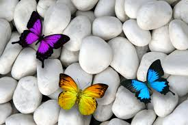 Colorful Butterflies White Stones HD