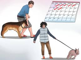 How To Train An Older Dog To Walk Calmly On A Leash: 9 Steps Do Female Dogs Get Periods How Often And Long Does The Period Dsc3763jpg The Best Retractable Dog Leash In 2017 Top 5 Leashes Compared Please Fence Me In Westward Ho To Seattle Traing Talk Teaching Your Come When Called Steemit For Outside December Pet Collars Chains At Ace Hdware Biglarge Reviews Buyers Guide Amazoncom 10 Foot With Padded Handle For Itt A Long Term Version Of I Found A Rabbit Wat Do