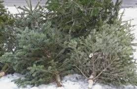 Nyc Christmas Tree Disposal by Are You Taking Down Your Tree And Want To Know Where To Recycle It