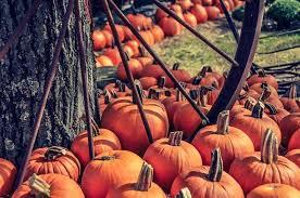 Pumpkin Patch Pittsburgh Pa 2015 by Fall At Hozak Farms Pennsylvania Haunted Houses