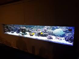 aquarienbau vor ort montagen aquarienkontor de by