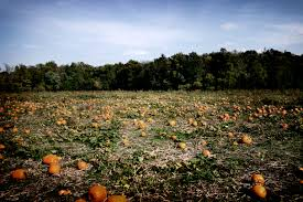 Pumpkin Patch Louisburg Nc by Elevation Of Paola Ks Usa Maplogs