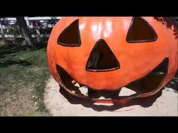 Pumpkin Patch Animal Farm In Moorpark California by Underwood Family Farms Moorpark Pics U0026 Youtube