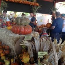 Pumpkin Patch Near Chandler Az by Tolmachoff Farms 101 Photos U0026 60 Reviews Pumpkin Patches