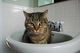 cat in house house cats in basins