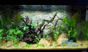 juwel aquarium vision 260 aquarium background for juwel vision 260 aquarium 3d thin rock