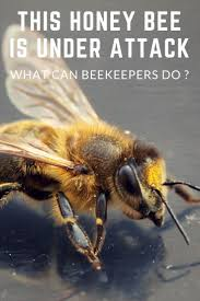 1034 Best Beekeeping Tips And Tricks Images On Pinterest | Bee ... How To Keep Bees A Beginners Guide Bkeeping Deter And Wasps And Identify Which Is Family 2367 Best Homestead Animals Images On Pinterest Poultry Raising Best Bee Hives Images Photo Wonderful To Away Become A Backyard Bkeeper Fixcom Why Your Child Needs Working Bee Urban Honey Back Yard Made Simple Image On Marvellous 301 Keeping Bees 794 The Complete 7step Chickens In Plants That Simplemost