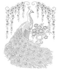 Peacock Coloring Pages Tail Down