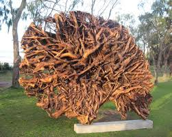 Monumental Environmental Artwork The Trunk And Root Of A Camphor Laurel Tree