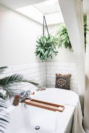 Plants For Bathrooms With No Light by Best 25 Plants In Bathroom Ideas On Pinterest Bathroom Plants