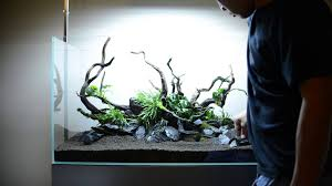 Step By Step Aquascape Time Lapse: Aqueous Reflection 90cm Aquavas ... Aquascaping Fish Tank Projects Aquadesign George Farmers Live Aquascaping Event At Crowders Ipirations Mzanita Driftwood For Inspiring Futuristic Home Planted Riddim By Alejandro Menes Aquarium Design Contest Ada Horn Wood Beautiful Natural Hardscape For Superwens 2012 Aquascape Petrified Youtube Fish Aquariums The Worlds Best Planted Aquarium Products Designs Reviews Out Of Ideas How To Draw Inspiration From Others Aquascapes 7 Wood Images On Pinterest Sculpture Lab Tutorial Nano Cube Size 20 X 25h