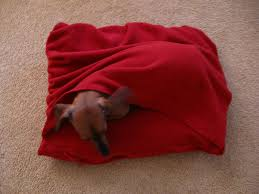 Burrowing Dog Bed by Snuggley Dog Bed