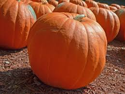 Natural Fertilizer For Pumpkins by Growing Pumpkins In Containers Hgtv