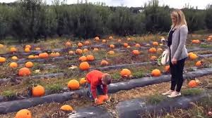 Marana Pumpkin Patch Festival Marana Az by V2 Pumpkin Patch U0026 Corn Maze Youtube
