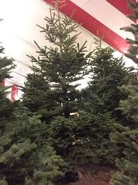 Silvertip Christmas Tree Orange County by Blake U0027s Christmas Tree Lot 18 Reviews Christmas Trees 34111