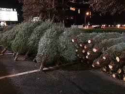 Types Of Christmas Tree Leaves by It U0027s A Wonderful Life Macarons U0026 Paperbacks